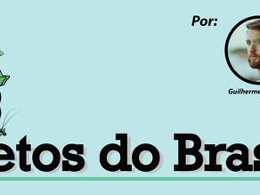 Insetos do Brasil: a divulgação científica em prol da conservação!