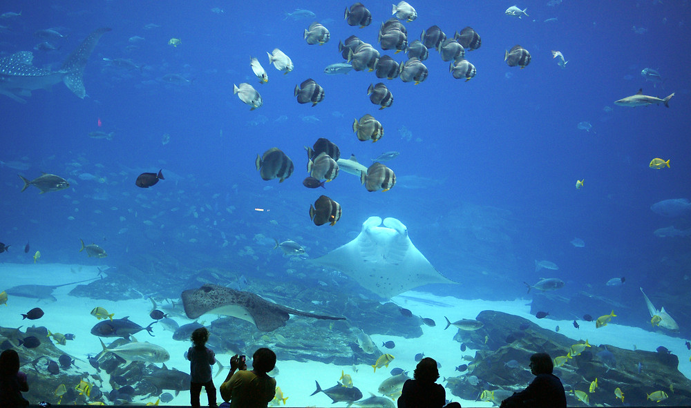 People in front of a huge water tank with fish at an aquarium.