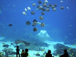 """La fauna del """"#ecosistema #emprendedor"""""""