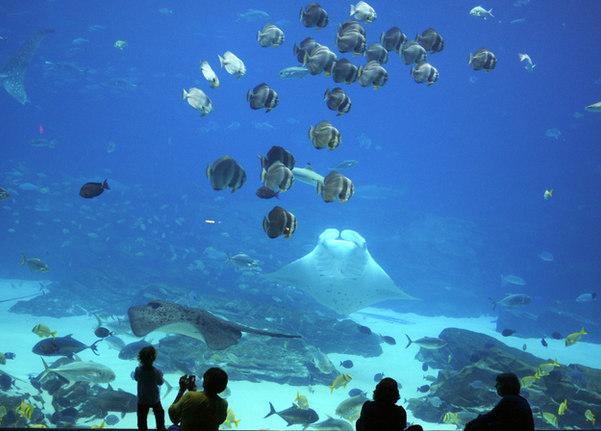To the aquarium