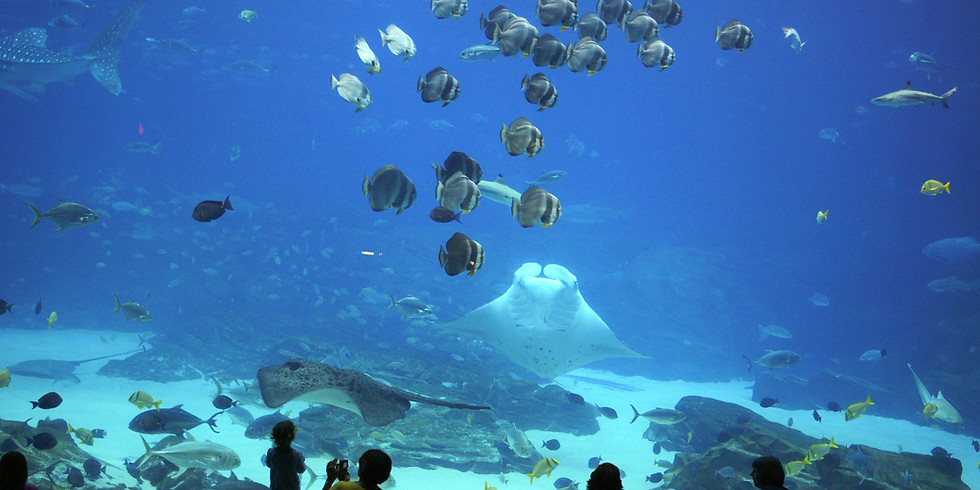 Joy Trip - St. Lucie County Aquarium