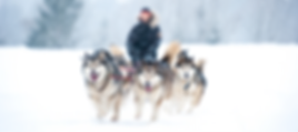 Dog sled.png