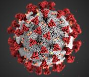 coronavirus-illustration-1024x576_edited