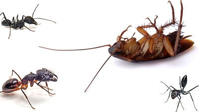 Complete Pest Control, Cheshire