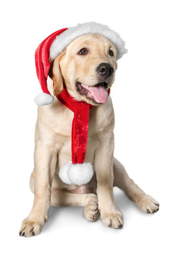 How to Avoid the Dangers of Holiday Decorating if You Have a Dog