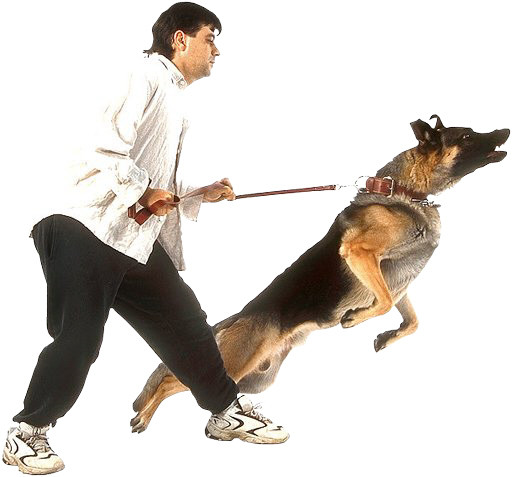 Does your dog take you for a walk by dragging you down the street?