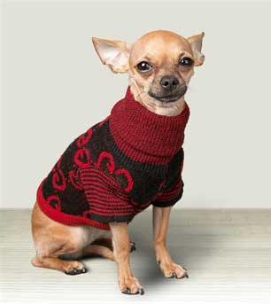 Does my Dog Need a Winter Coat or Sweater?