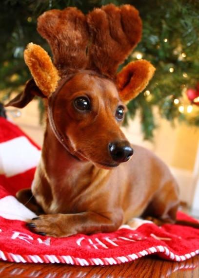 12  Ways to Keep You Dog Safe Over the Holidays