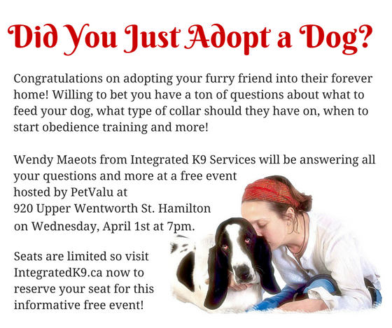 Did you just adopt a dog?