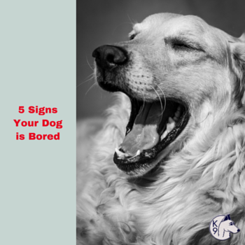 5 Signs Your Dog is Bored