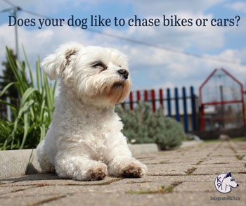 Does your Dog Chase After Bikes or Cars?
