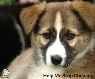 Can You Help Me Stop Chewing?