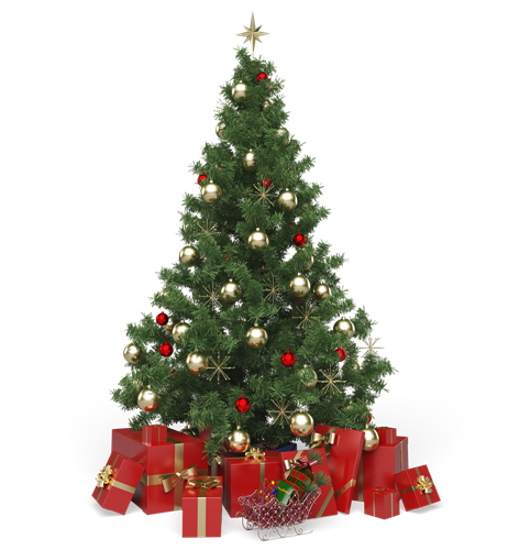 Dogs and Natural Christmas Trees – Are They Safe?
