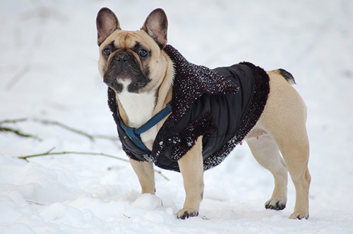 Is Your Dog Ready for Winter