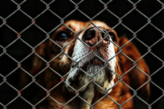 ARE YOU GETTING A RESCUE DOG?