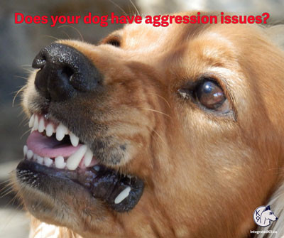 Does Your Dog Have Aggression Issues?