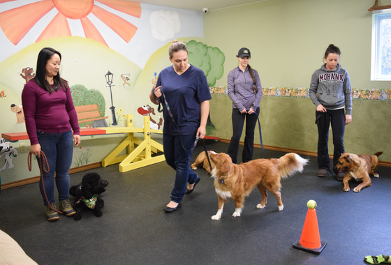 How to Find a Dog Trainer?