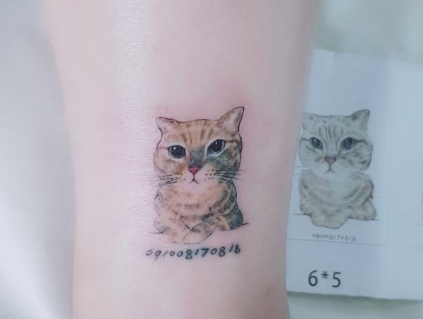 貓的名字叫Money
