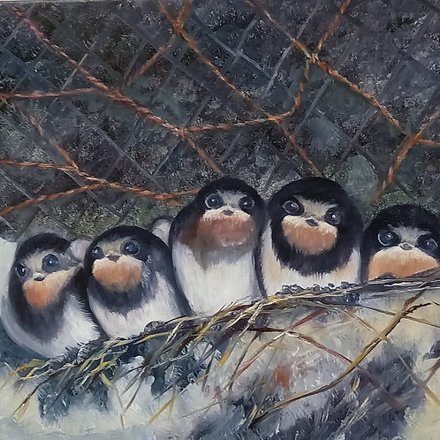 Nesting Swallows