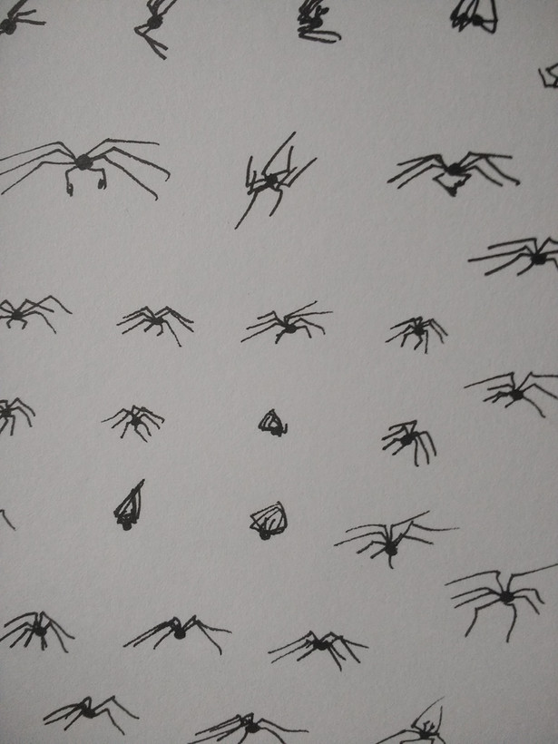 More spider bodies