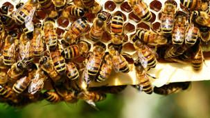 Vědci varují: Svět hmyzu je na pokraji katastrofálního zhroucení