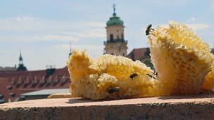 V Praze jsou včelí úly na střechách na 19 místech
