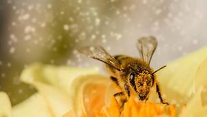 Včelí fakta
