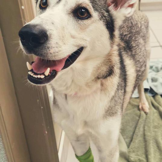 Lola heureuse de partir rejoindre une nouvelle famille qui l'attend au refuge!