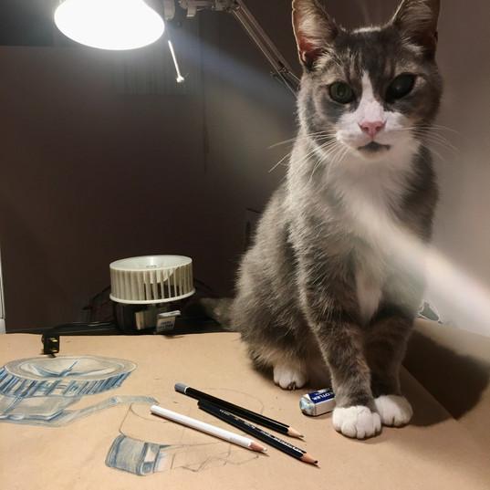 Sushi est un fier combattant du diabète depuis plusieurs années. Il a perdu son oeil à la cataracte, mais il n'a pas perdu sa passion pour le papier!