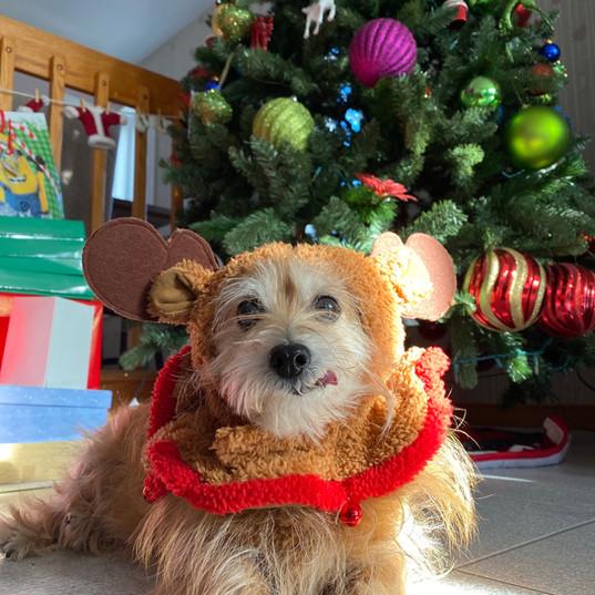 Joyeux Noël de notre cher pitou!