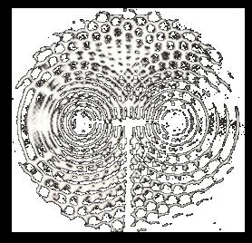 Interférences dans l'eau, en éclairage stroboscopique. Les zones d'amplitude maximale sont claires et les zones d'amplitude nulle sont noires