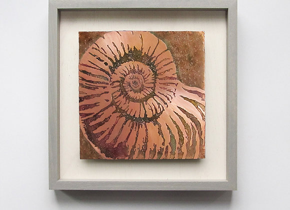 Nautilus Fossil Etched Copper Wall Art with Hardwood Farmhouse Frame