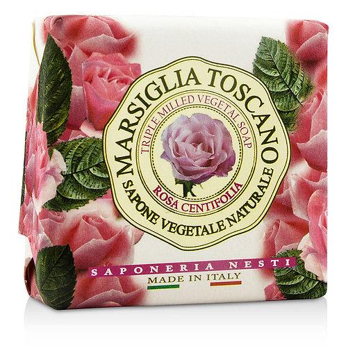 ROSA Centifolia - MARSIGLIA  TOSCANO