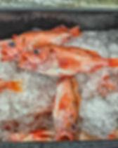 Redfish 1.JPG
