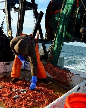 shrimp9_edited.jpg