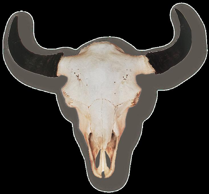 steer skull.png