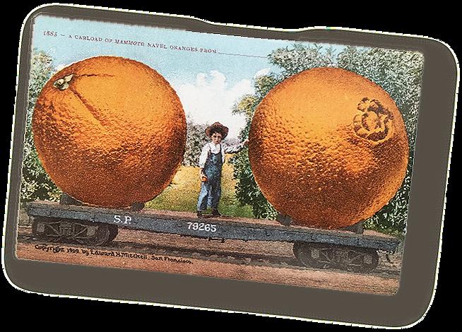 oranges.png