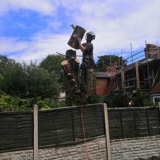 tree removal birmingham