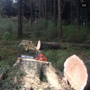 spot thinning large douglas fir for NRW