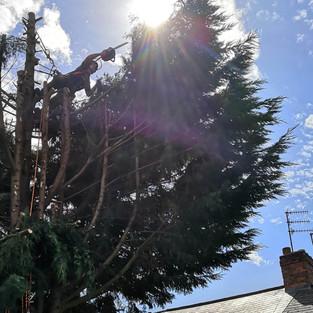 birmingham garden tree dismantle