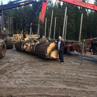 3TN douglas log for the saw mill