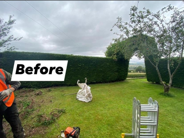 hedge reduction defore