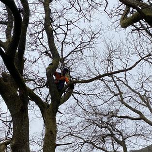 tree surgeon mid-wales
