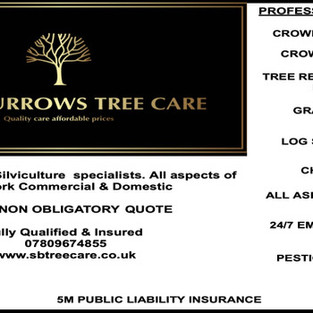 Sean Burrows Tree Care