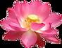 BRAYLISS LOGO FINAL solo flor.png