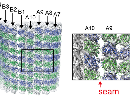 First paper: Microtubule doublet in high resolution
