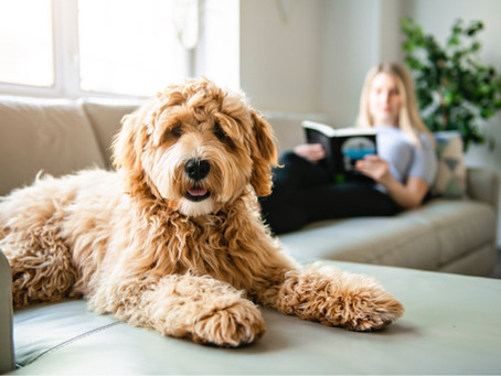 Check Out These Everyday Helpful Pet Care Tips!