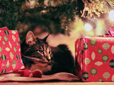 Protect Your Cat This Holiday Season