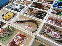 お魚センター3..jpg
