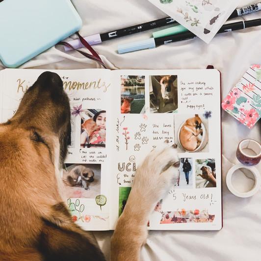 #JournalingPrompts: Document Adventures With Your Furry Ones